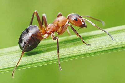 ۴ بخش قسمت منطق مورچه ای چیست؟